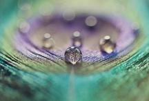 misc. / by Delaney Parker