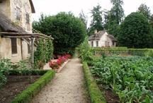 Grow-My-Food Gardening