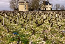 Bordeaux 2014 / Pictures from our recent trip to Bordeaux to taste the 2014 vintages before their release.