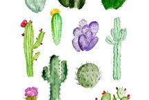 Növény/ gyümölcs/ zöldség