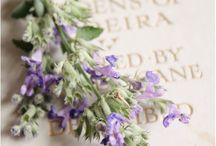 Lavendel~Lavender / by Manon Koene