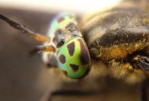 insects / macro photografy