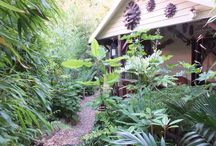 Alternative Eden Exotic Garden / Photos from our exotic garden located in Luton UK. For regular blog updates check http://www.alternativeeden.com/