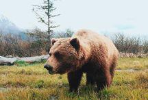 медвежья братва