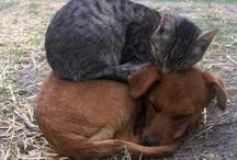 il mondo degli animali ... / amo gli animali
