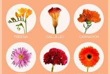 Flower Types/Botanicals