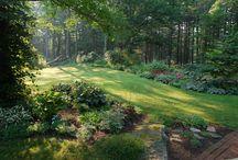 Woodland Garden / by Mitzy Gemmill