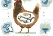 Animal Science Class Ideas
