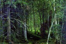 arboles / pintura de bosques y arboles