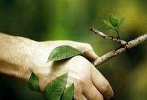 mano e ramo