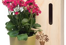 Plant Gifts by Plants Please! / Potted indoor plants boxed and delivered within NZ