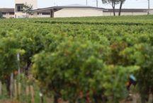 Bordeaux Wine / Bordeaux wine, winemakers, wine labels & more