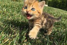 so cute - cats