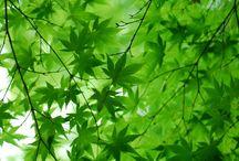green vert végétal
