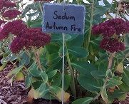 Garden Labels / Great ideas for labeling your plants, shrubs, and trees. Never again forget what you've planted and where it is!