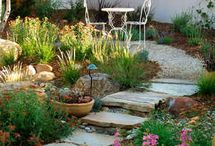 Kaiwaka Garden Ideas / Native and edible is what I am aiming for.