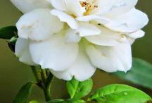 flowers / by Patricia Penteado