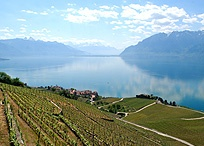 Food, Drink & Sweets Travel / Travel Touring for Wine Tasting, Beer Brewing and Fine Cuisine and Desserts  / by BTEMichael