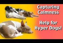 DOG- REACTIVITY-CALMNESS