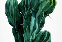 Plantas ornato