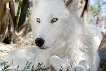 WOLF & Werewolf Artwork