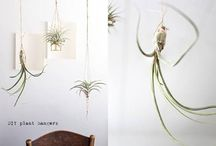 Hanging plants indoor