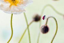 Ladybugs / My pictures of Ladybugs,Ladybirds,Coccinella