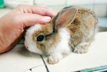 Bunny Know-How / bunny, bunny, and bunny