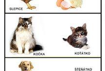 Domáca zvieratá