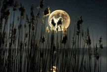 Knowing Moon / Honoring you cycle. Diving deep into it's knowledge. www.carinalyall.com