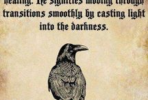 Corvids / Corvidae is a cosmopolitan family of oscine passerine birds that contains the crows, ravens, rooks, jackdaws, jays, magpies, treepies, choughs, and nutcrackers.
