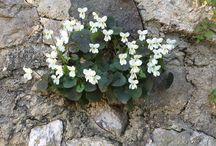 Flowers in the castle / I #fiori del #Castello d'Arcano nelle magnifiche #foto di Isa Borghese
