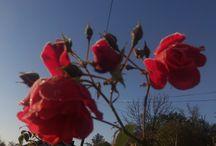 rośliny w moim ogrodzie