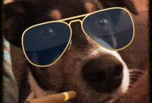 Crazy dog / My dog coop is a playa