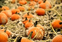 Fall  / by Erin Corbett