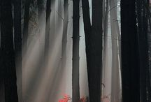 Trees /