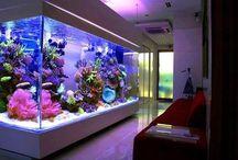 Installing @aquarium is the latest trend
