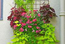 North facing hanging basket