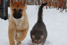 zwierzaki