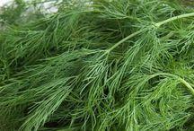 bitkisel
