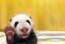 Just cute. / by Lisa Goedecke