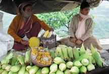 Lonavala Food Guide / About Lonavala Local Food assistance