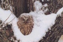 Owls, Eagles, hawks