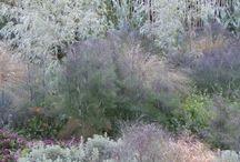 kwietne łąki