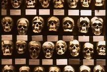 Skulls :$