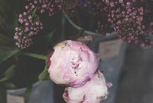 Blomster og lign.