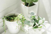 tasarım bahçe çiçekçilik / tasarım