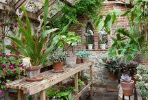 växthus - orangeri  -  conservatory - greenhouse