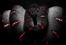 serpent rouge noir