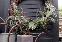Air Plants.....~♡~